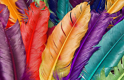 Gerahmter Druck - Mehrfarbig Vogel Federn (Bild Plakat - Vogel Kostüm Bilder