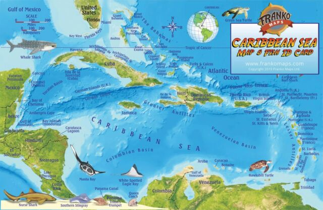 Caribbean sea coral reef creatures guide map laminated fish card caribbean sea coral reef creatures guide map laminated fish card franko maps gumiabroncs Choice Image