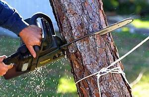 Arborist Services Perth Perth City Area Preview