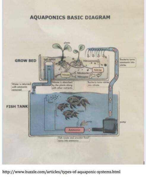 Complete Aquaponics System Pots Garden Beds Gumtree Australia