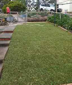 Instant Roll Out Turf / Lawn Semaphore Port Adelaide Area Preview