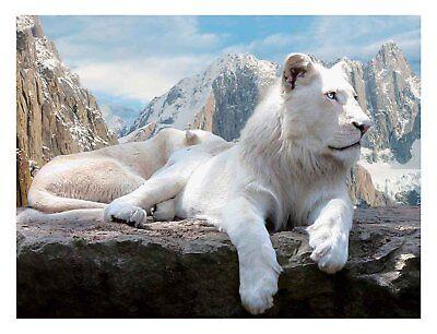 White Lions - 3D Lenticular Poster - -12x16 Print