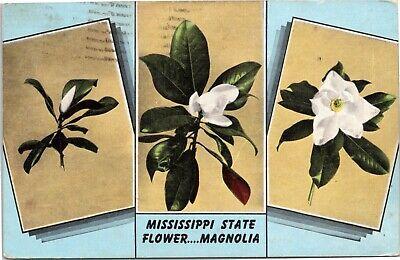 postcard Mississippi State Flower….Magnolia - Mississippi State Flower Magnolia