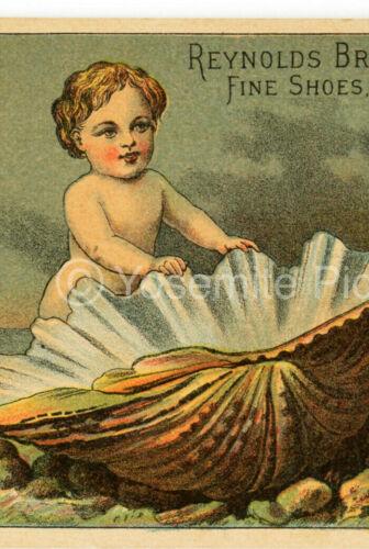 a6 1880 ? Trade Card Reynolds Bros Boy Seashell Shoes Utica NY 465a
