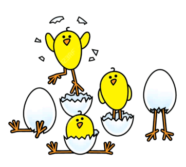 Easter Chicks / Chickens & candled eggs