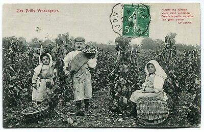 CPA - Carte Postale - France - Les Petits Vendangeurs - Enfants dans les Vignes