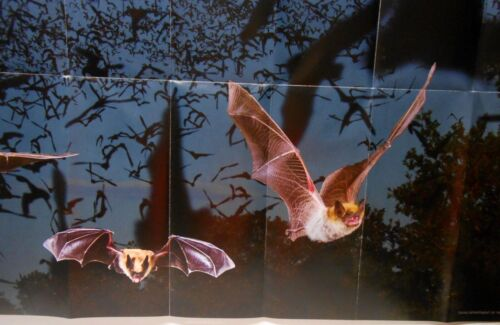 Poster -Texas Bats - Identification, Bridge Locations & Watching Bat Tips Events