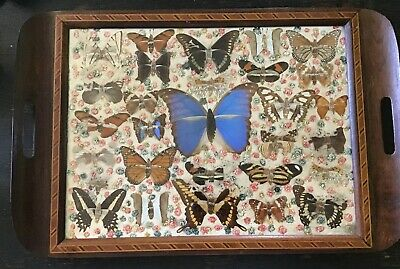 "20"" X 13.25 Antique Marquetry & Real Butterfly And Flower Collage Tea Tray"