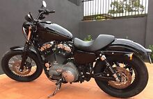Harley Davidson Nightster sporty Queanbeyan Queanbeyan Area Preview