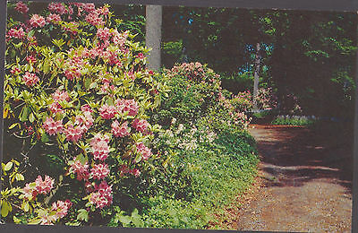 Winter Gardens Winterthur Delaware    # C3