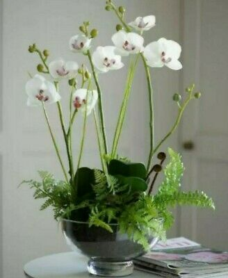 Bloom Braveheart Orchid Centrepiece