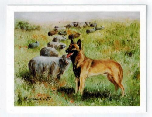 New Belgian Malinois With Sheep Notecard Set - 12 Note Cards By Ruth Maystead
