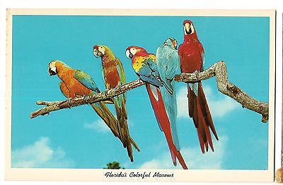 COLORFUL MACAWS PARROT JUNGLE Birds South Miami Florida Postcard FL