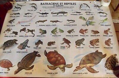Poster School Poster 1972 Tortue Lute Serpent Tree Frog Lizard