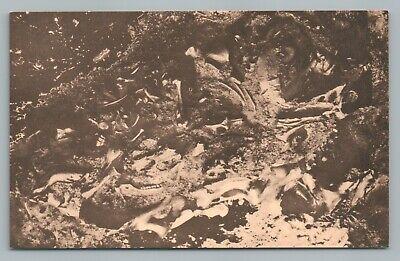 """Fossil Bones"" Rancho La Brea Tar Pits—Vintage Paleontology PC Los Angeles 1940s (Rancho La Brea)"