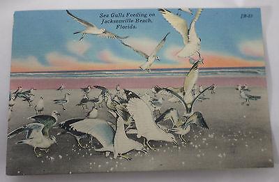 SEA GULLS FEEDING ON JACKSONVILLE BEACH, FLORIDA
