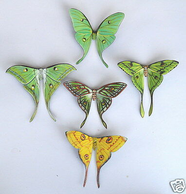 Moon Moth Magnets Luna,India,African,Spanish,Madagascar