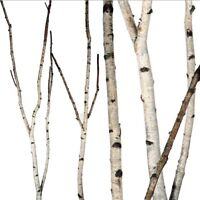Birch Wood Wanted (branches, small pieces)