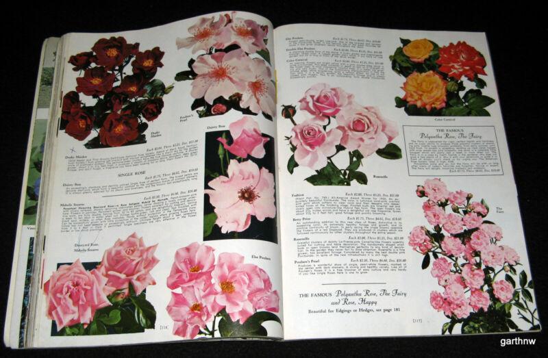 HARDY PLANTS 1965 CATALOG THE WAYSIDE GARDENS MENTOR OHIO * ROSES SHRUBS BULBS