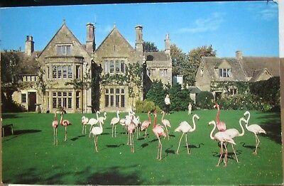 England Flamingoes Birdland Bourton on the Water - posted