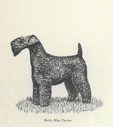 Kerry Blue Terrier - 1964 F.W. Davis Vintage Dog Print - Matted