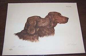 Paul Wood Pencil Signed Print setters - Paris Etching Society - IRISH SETTER DOG