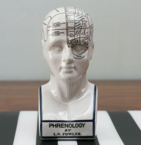 Porcelain Phrenology Head Medical Collectible Decor