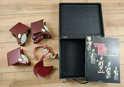 Vintage Nystrom Womens Mens Reproductive System Anatomical Model W Case Am200