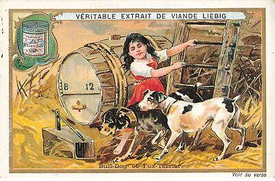 Chromo liebig #25440 bull dog et fox terrier chien dog s615