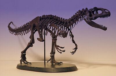 Allosaurus fragilis dinosaur skeleton model kit