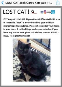 Still looking for our Black cat Jack
