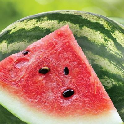 Summer Seeds Watermelon Cookout BBQ Picnic Theme Party Paper Beverage Napkins