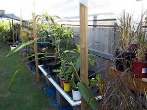 Plant Sale Sat Morning 4th of March Goodna QLD 6:30am-11:30am Goodna Ipswich City Preview