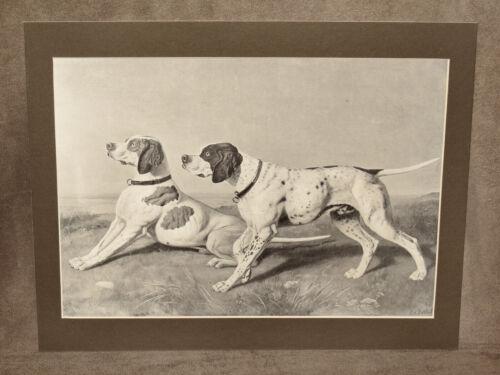 VINTAGE C. VON RETH PRINT SCAMP AND BORAX GERMAN SHORTHAIR POINTER DOG