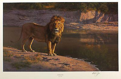 "ANTHONY GIBBS ""Evening Glare"" lion SIGNED LTD EDITION! SIZE:49cm x 72cm NEW RARE"