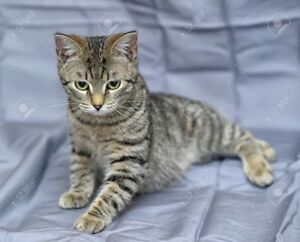 Adorable cat looking for forever home