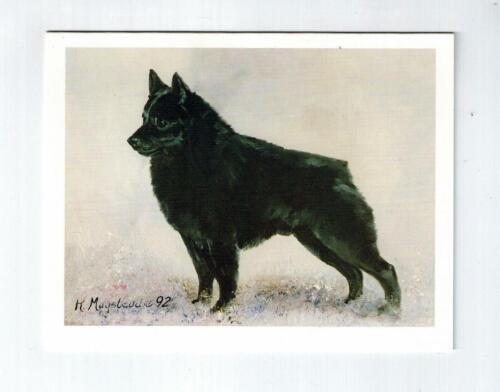 New Schipperke Profile Notecard Set 6 Notecards Envelopes By Ruth Maystead SCP-6