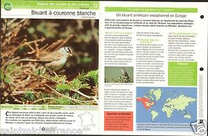 "Bruant à couronne blanche - White-crowned Sparrow FICHE OISEAU BIRD - France - PORT GRATUIT A PARTIR DE 4 OBJETS BUY 4 ITEMS AND WORLDWIDE SHIPPING IS FREE EXCEPT USA, CANADA, AMERICA ONLY TRACKING MAIL FICHE TECHNIQUE, SPECIFICATION SHEET PAPIER GLACÉ, GLAZED PAPER RECTO-VERSO FORMAT 35 CM X 23,5 CM SIZE : 12.06"" X 8.28""  - France"