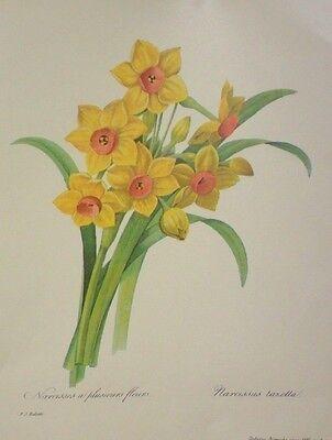 "Vintage Patricia Nimocks Decoupage sheet - 7 1/2"" x 9"" Yellow Dafffodils"