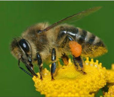 Experienced Apiarist- Honey and pollination Bee Business Katherine NT Darwin Region Preview
