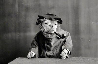 Crazy Vintage Dog Smoking Pipe PHOTO Bull Dog Circa 1905 Weird Funny Strange