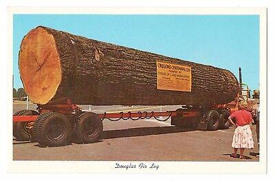 Douglas Fir Log Oregon Vintage Postcard Oct17