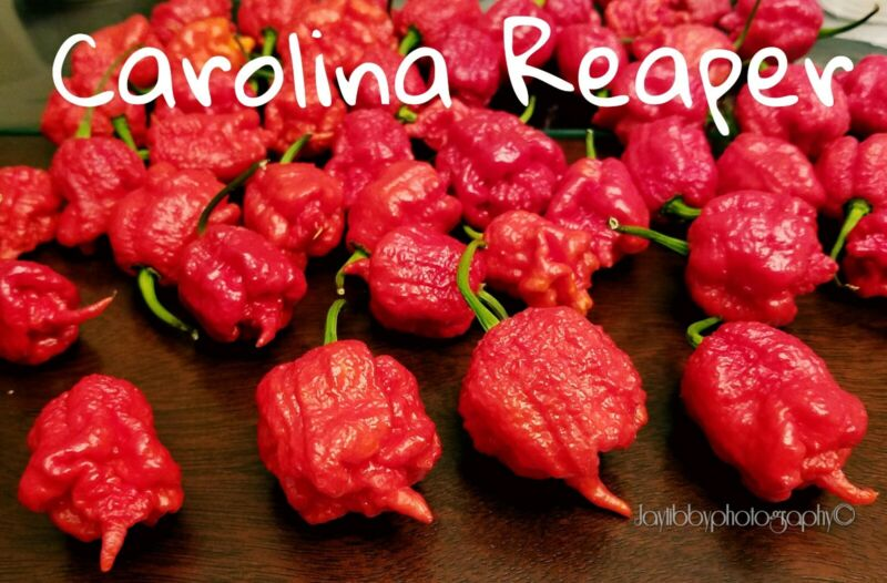 (25+) Carolina Reaper Pepper Seeds Worlds Hottest