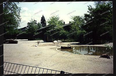 Foto-Stuttgart-Wilhelma-Bad-Cannstatt-Spiessbock-Gehege-Architektur-um-1985-27