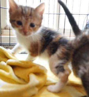Kittens Kittens Kittens - Come Meet our Rascals CPR ADOPT/RESCUE