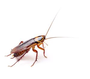 A1 Ok  Pest  control termite expert  Harris Park Parramatta Area Preview