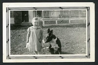 Cute Baby Toddler Dog Terrier Mix ? Vintage Photo Snapshot 1940s Puppy Terrier Mix Puppy