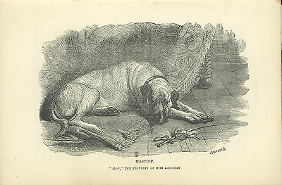 Bookplate Mastiff Lion, Miss Aglionby, The Dog by Idstone, Third Ed