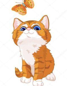 Geelong Region Vic Cats Kittens Gumtree Australia Free Local Classifieds