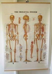 ANATOMICAL POSTERS - MEDICAL - V LARGE Cottesloe Cottesloe Area Preview